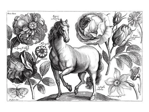 Vintage Equestrian Drawing print A3