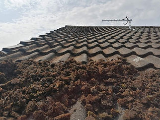 roof scraping moss