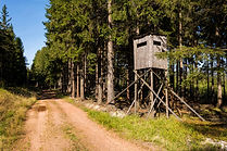 tree-stand-in-the-woods-861x574.jpg