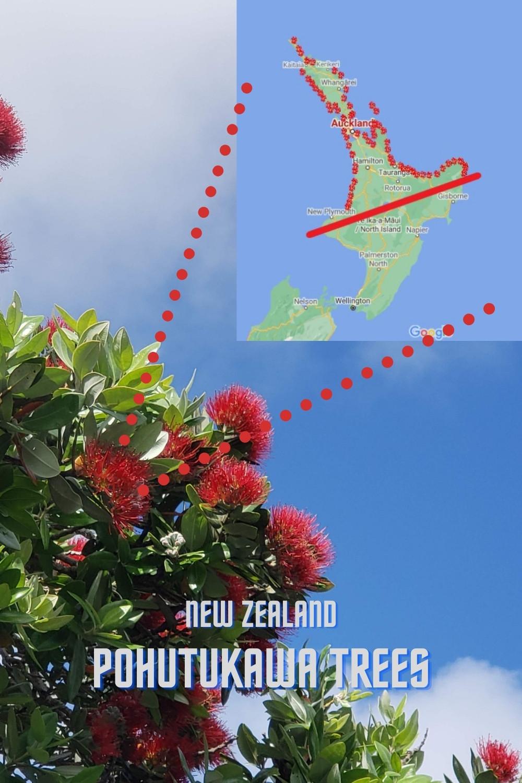 Graphic of natural distribution of Pohutukawa with a Pohutukawa bloom, tourist attraction Coromandel, Northland New Zealand