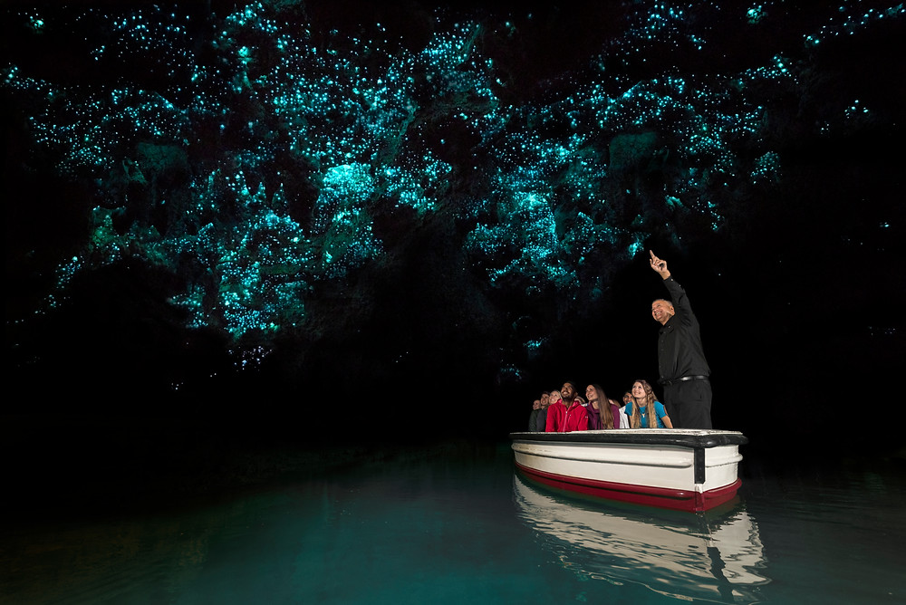 Book a tour in the Waitomo caves