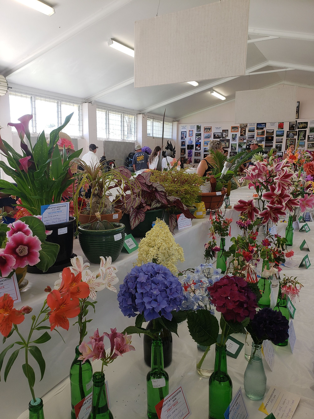 Floral entrants and the Kaikohe A&P show