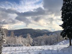 Čučoriedková plantáž v zime