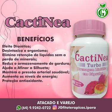 CACTINEA 2020.jpg