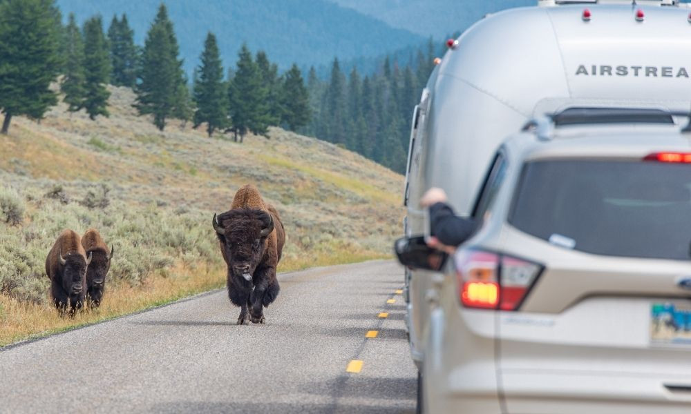 Explore Yellowstone National Park in Your RV