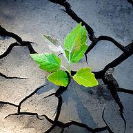 resilience2020b.jpg