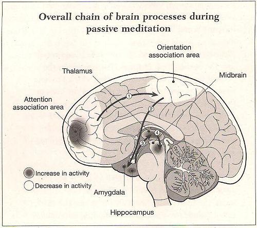 Neuro_brain_in_meditation.jpg