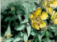fleur%20croquis001_edited.jpg