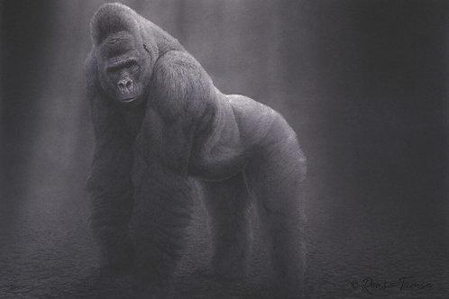 Beringei Beringei (Gorilla)