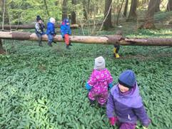 Kinder im Bärlauch-Feld
