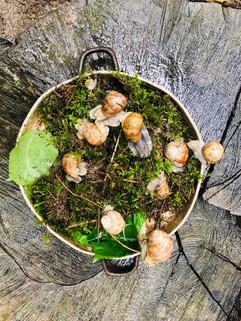 Escargots im Pfännli