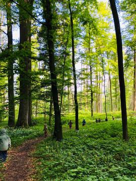 Frühling im Pfrundholz-Wald