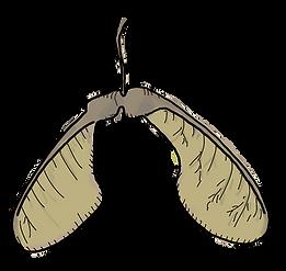 Lindensamen-Propeller.png