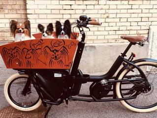 Ein ganz spezielles Cargobike