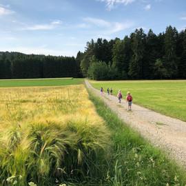 Wanderung über Felder im Sommer