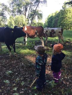 Auf Tuchfühlung mit den Kühen