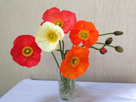 春の彩り「ポピー」