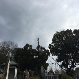 墓地の木々