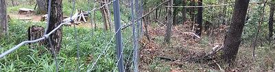 水源林2.jpg