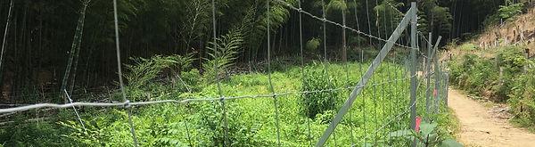 水源林3.jpg