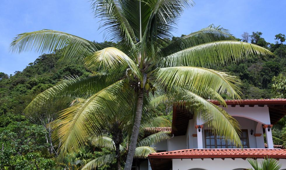 Costa Rica Trees