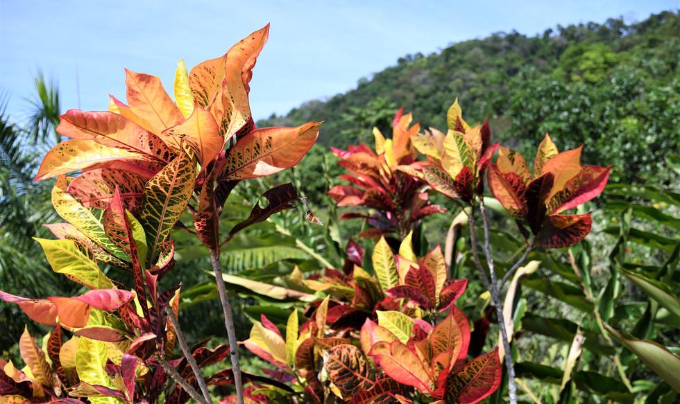 Costa Rica wildflowers
