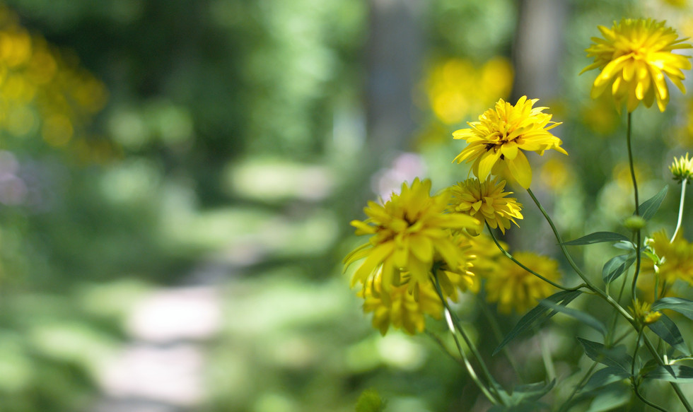 Wildflowers grow over the Heritage Trail