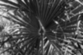 Black Magic tiff 36wx24h.jpg