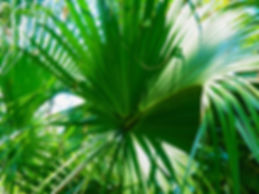 Green Palms. 40wx30 tif.jpg