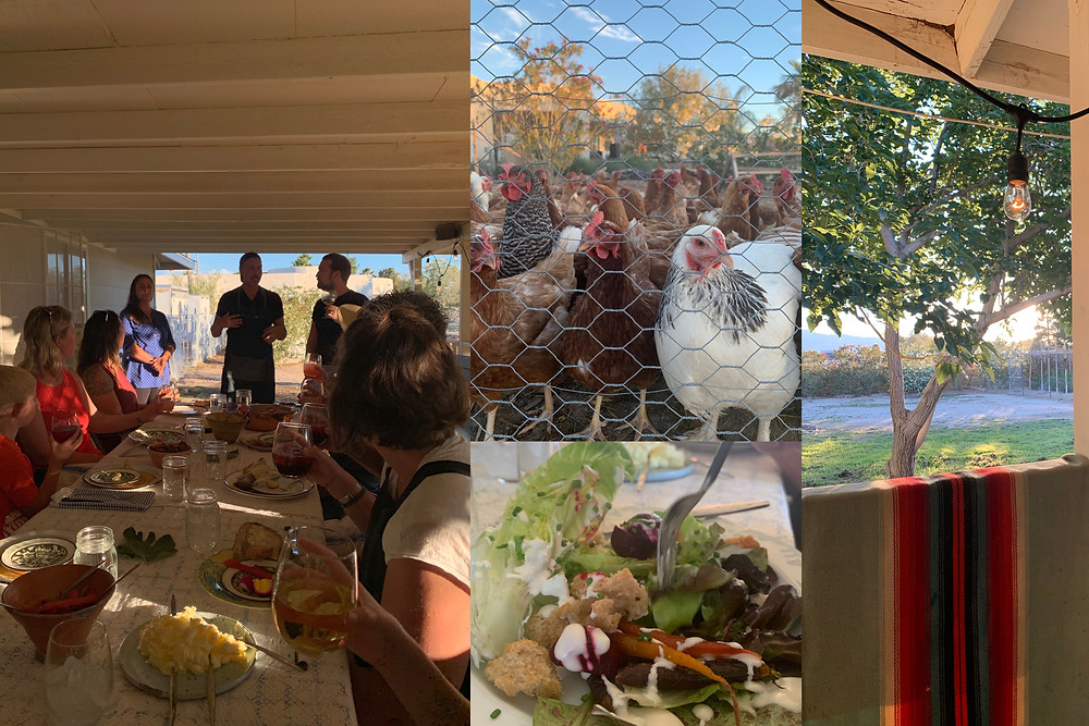 A collage of 4 images: One of the farm dinner table; one of some chickens staring at the camera from behind some chicken wire; one is a close-up of a beautiful salad with lettuce, carrots, croutons and caesar dressing, and one is a view from the farm porch of a shady tree and the produce growing in the background.