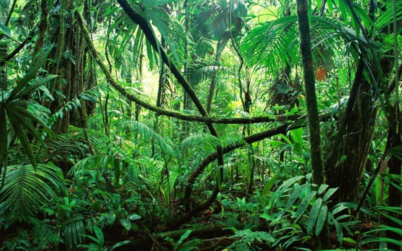 Marketing Dschungel | Lauterbach Kommunikation