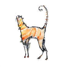 skinny cat.jpg