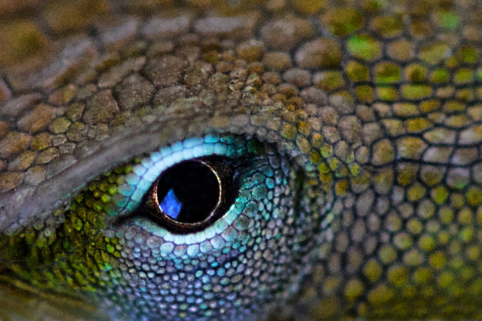 LizardReEdit.jpg