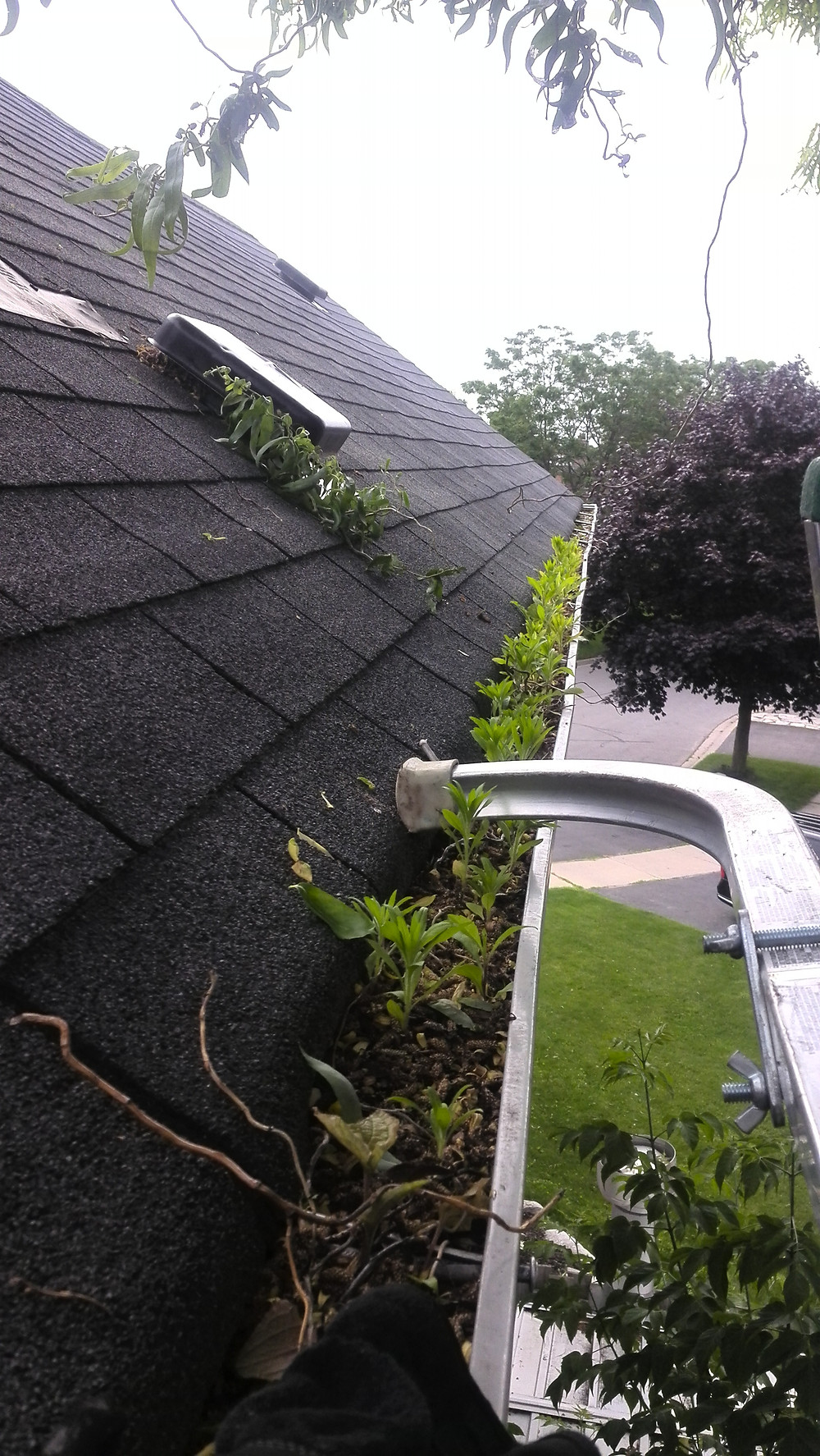 Dirty eavestrough - no leafguard on it - 1-855-wanna-reno?'s job