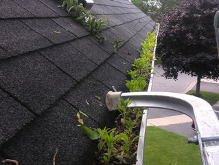 Benefits of Gutter Guards | Leaf guard installation in Whitby,Oshawa,Pciekring,Ajax,Courtice.