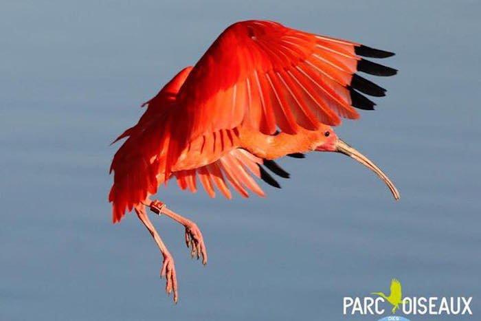 photo parc oiseaux