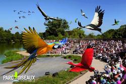 amphi parc des oiseaux