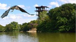 la tour du parc