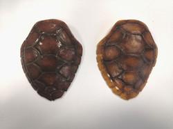 Multi layered tortoise shell props