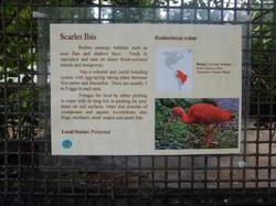Scarlet Ibis Facts