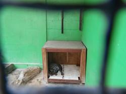 Ocelot Small Wildcat