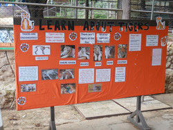 Learn About Tigers