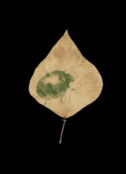 Ladybird leaf