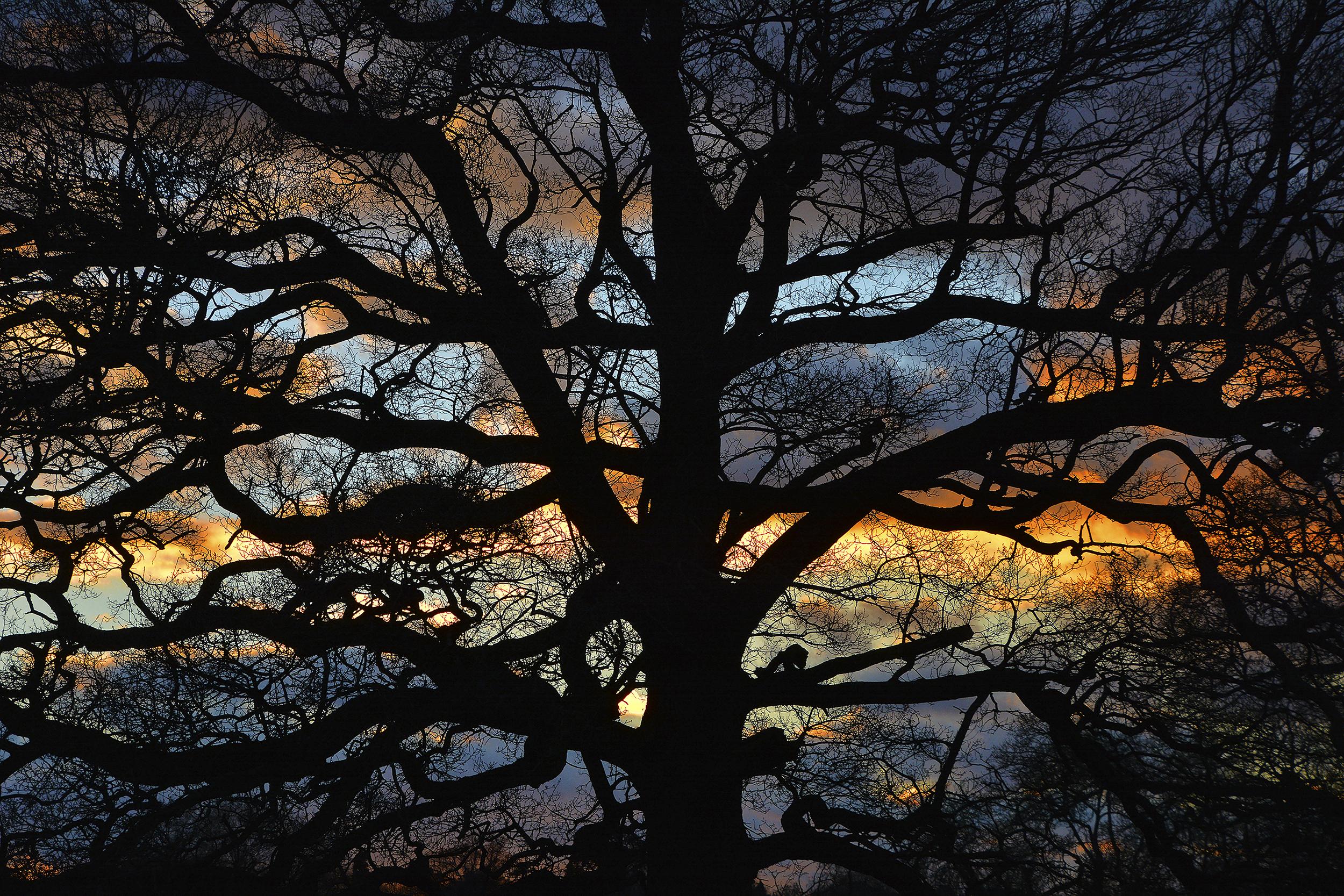 'Sissinghurst'
