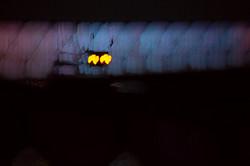 Illuminated River 2, London