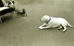'Dog to Dog', Paris