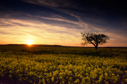 'Sunset, Appledore'