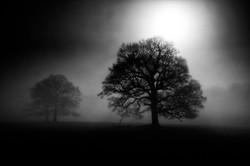 Dawn at Sissinghurst Castle