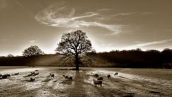 'Frozen Dawn, Sissinghurst'
