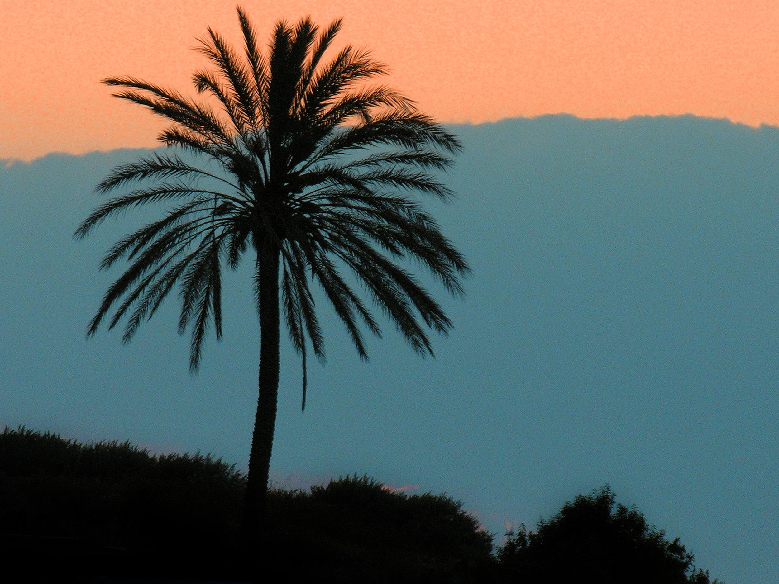 'Salina, Sicily'